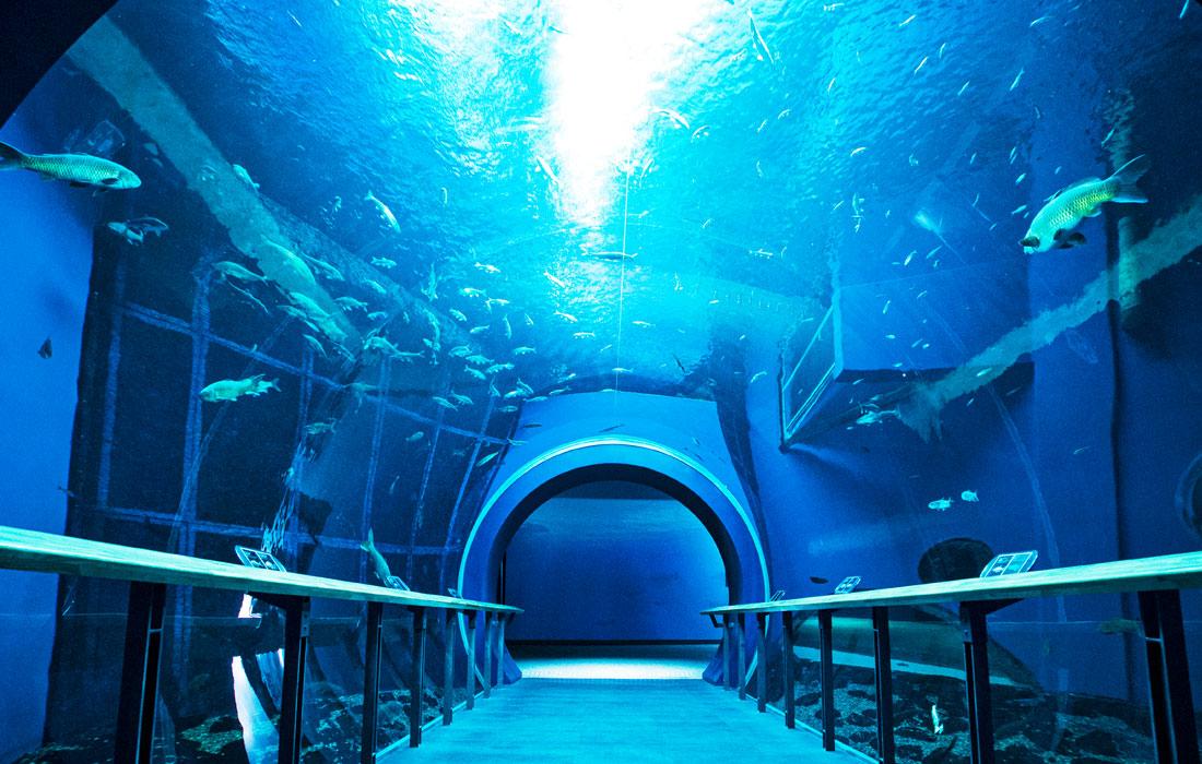 琵琶湖博物館画像